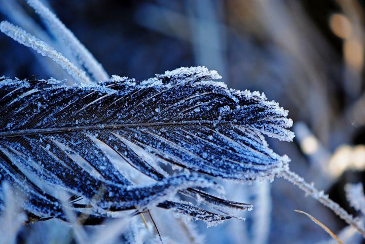 Feathered Snow - Tokolosi