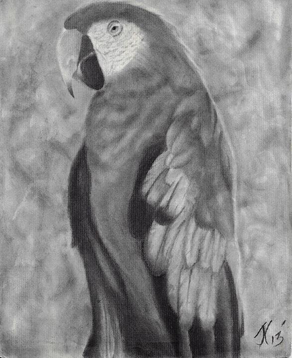 Mighty macaw - JoJo K