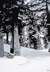 Colorado Winter Forest