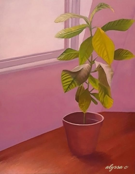 Plant in Pink Room - Alyssa Marie C
