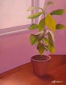 Plant in Pink Room