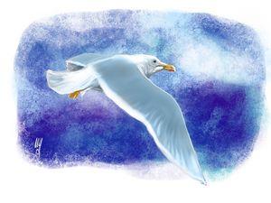 A Glaucous Gull