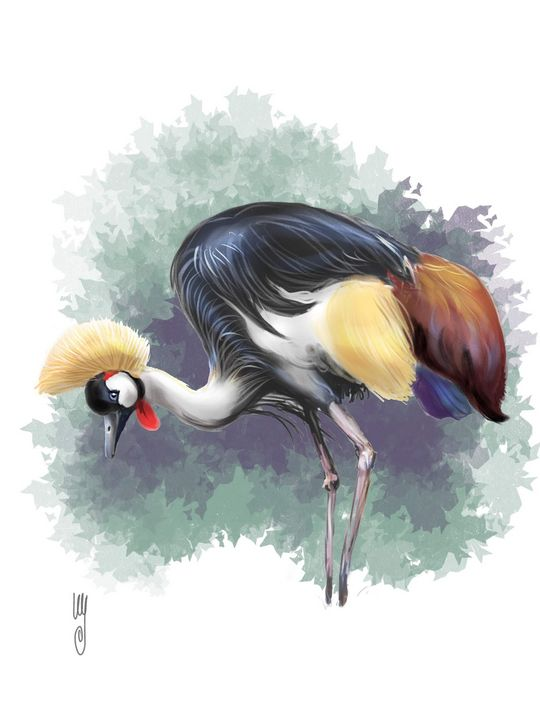 The Grey-crowned Crane - Artmagenta