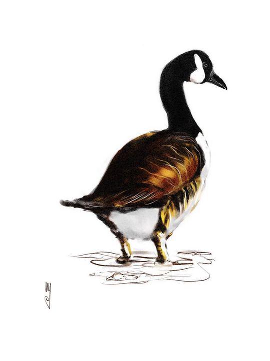 Canada goose - Artmagenta