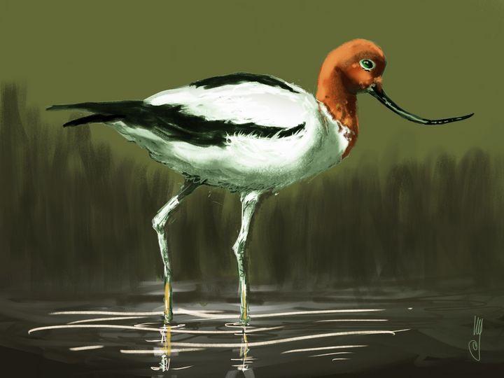 The red-necked avocet - Artmagenta