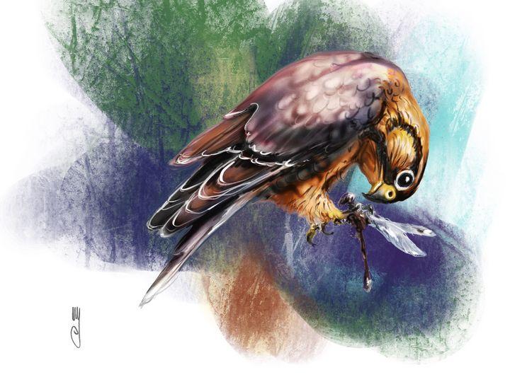 A merlin falcon - Artmagenta