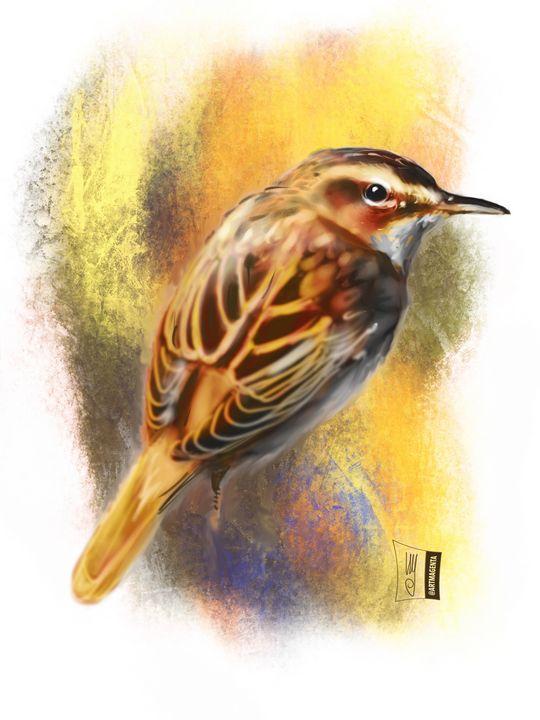 Sedge Warbler - Artmagenta
