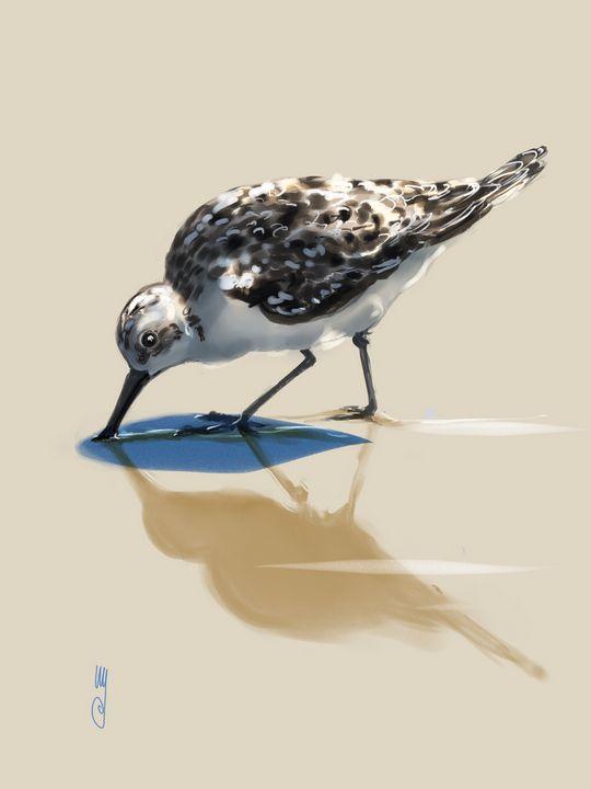 Sanderling - Artmagenta