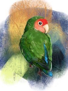 Rosy-faced Lovebird - Artmagenta