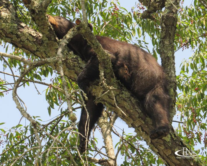 """Tree Snoozing - Ronnie """"Flash"""" Norris Photography"""