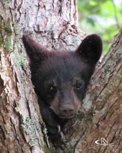 Peek-A-Boo Baby Bear