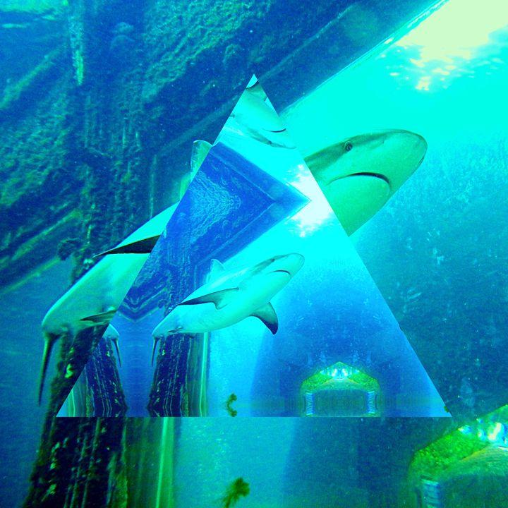 Shark Shark - Ben Kass