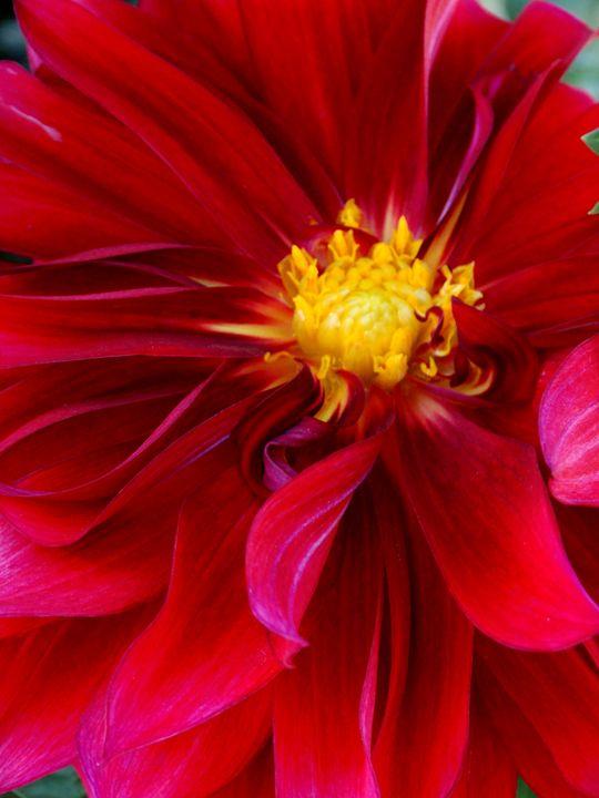 petals - Scott Bennett/Photoscapes Landscapes Ohio