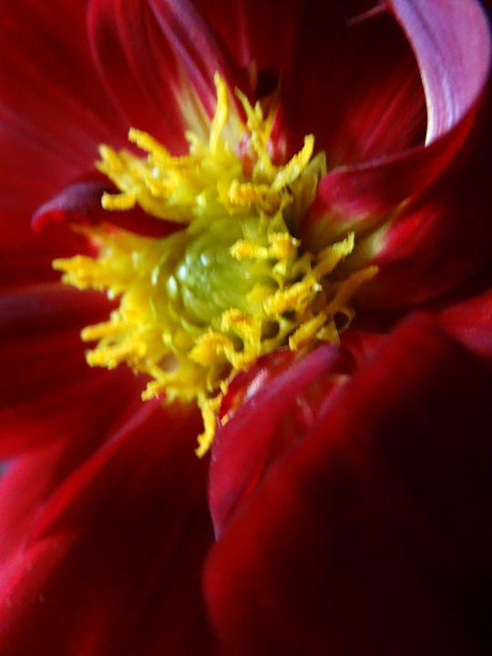 Petals 8 - Scott Bennett/Photoscapes Landscapes Ohio