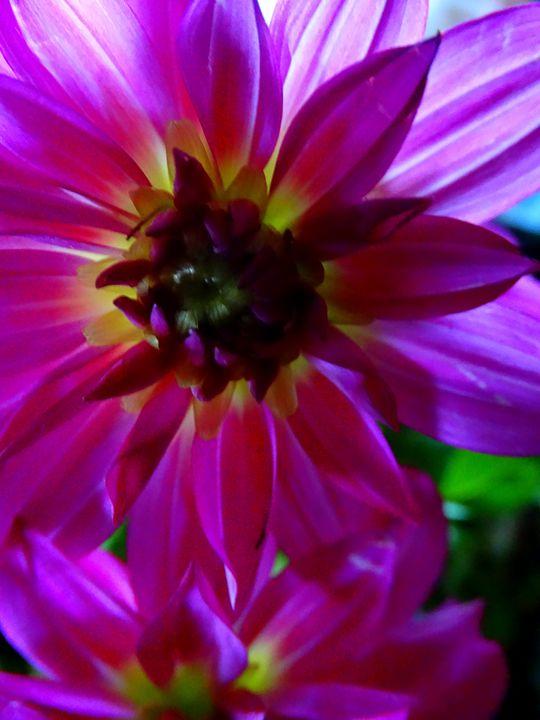 Petals 5 - Scott Bennett/Photoscapes Landscapes Ohio