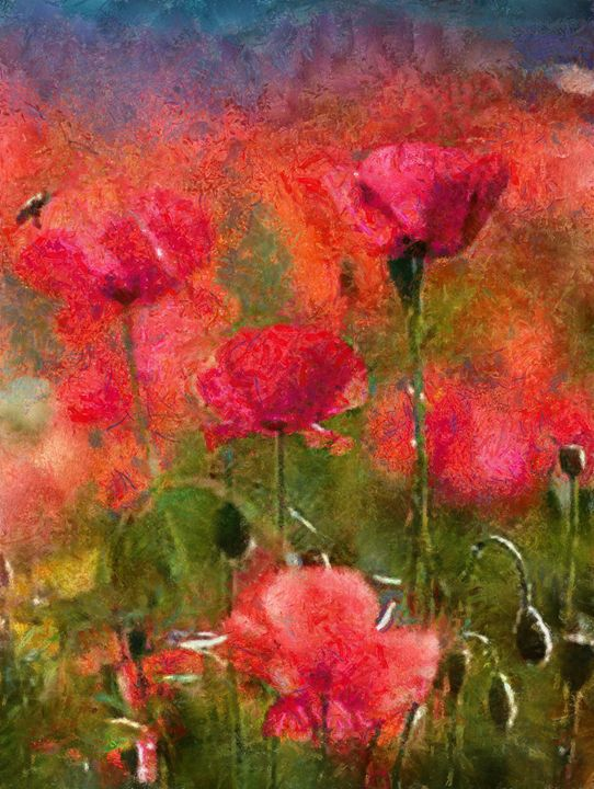 poppies - Scott Bennett/Photoscapes Landscapes Ohio