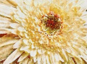 Full Bloom - Scott Bennett/Photoscapes Landscapes Ohio