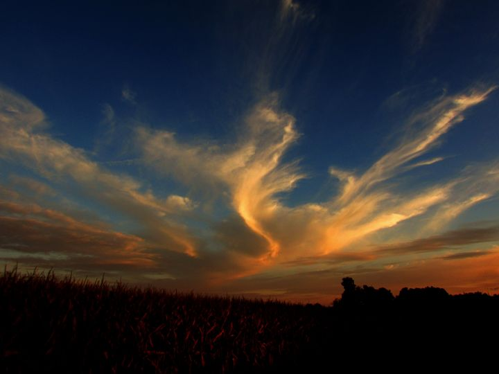 webbing out - Scott Bennett/Photoscapes Landscapes Ohio