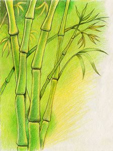 Bamboos - Jean-Luc Bernard