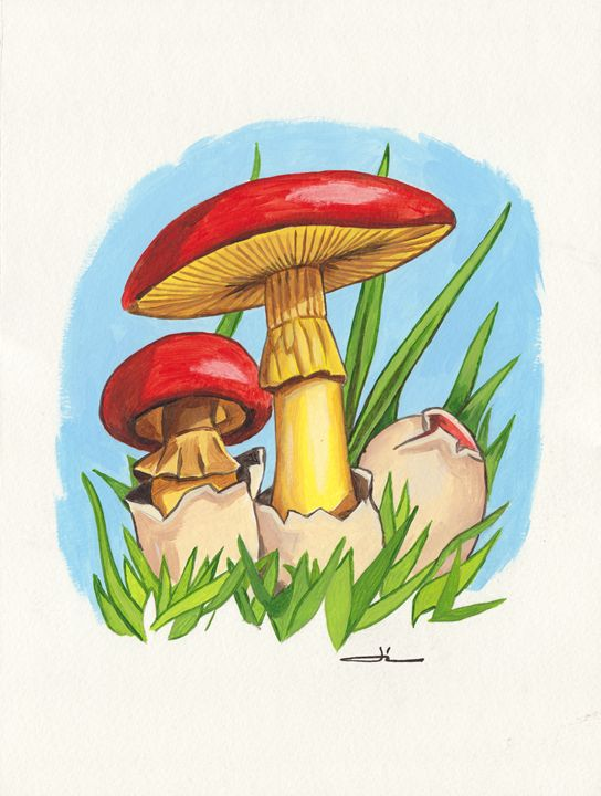 Oronge Mushrooms - Jean-Luc Bernard