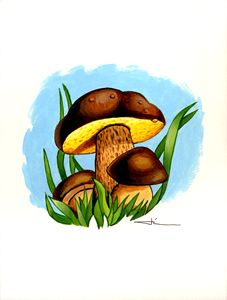 Bolet mushrooms