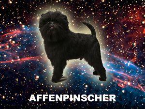 Spacedog 1: Affenpinscher - VERNON HOWL ART PRINTS
