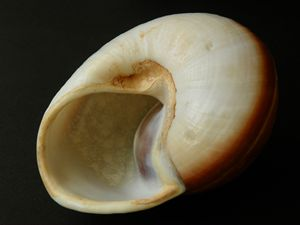 Shell Inside and Out