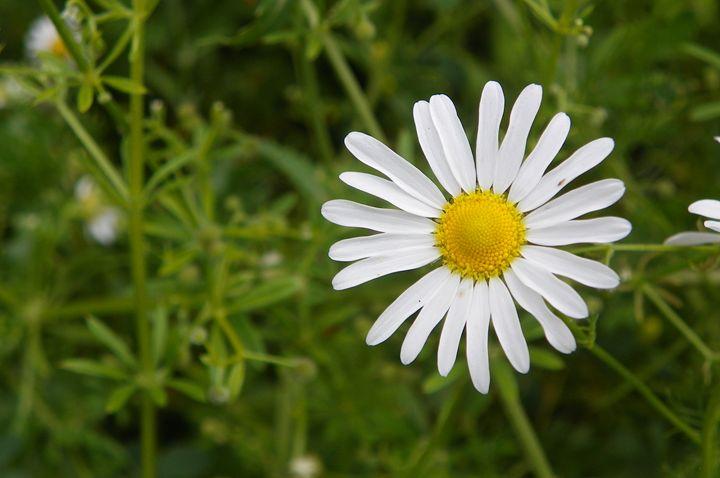 Daisy - Helen Standing
