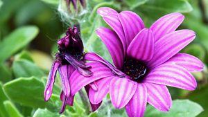 The Lustrous Flower