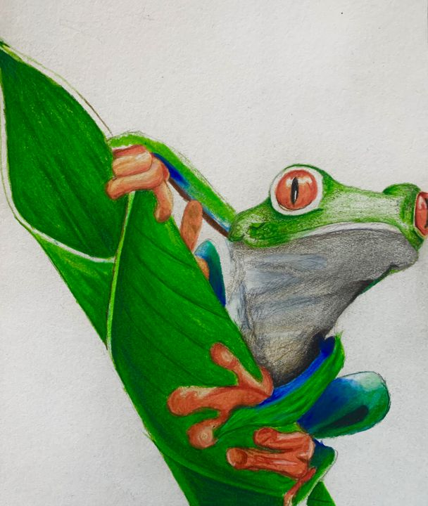 Red Eyed Tree Frog - Artist_Alberto