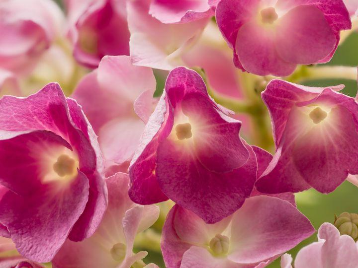plants from above hortensie - lumenesca