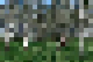 birches nude - lumenesca