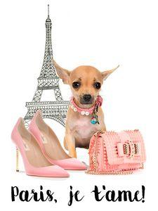 CUTE Lovely Chihuahua Dog