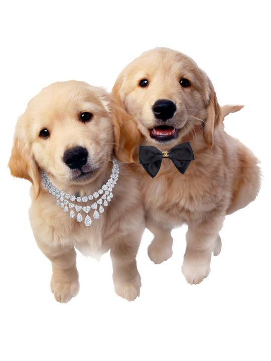 CUTE COUPLE PUPPIES - MONTORO