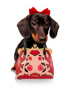 CUTE PINCHER DOG WITH BAG