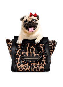 CUTE PUG DOG IN A BAG