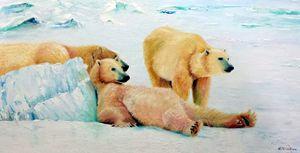 CANADIAN POLAR BEARS