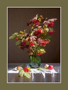 Viburnum Red Berries