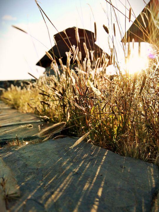 reeds - sanjay krishnan