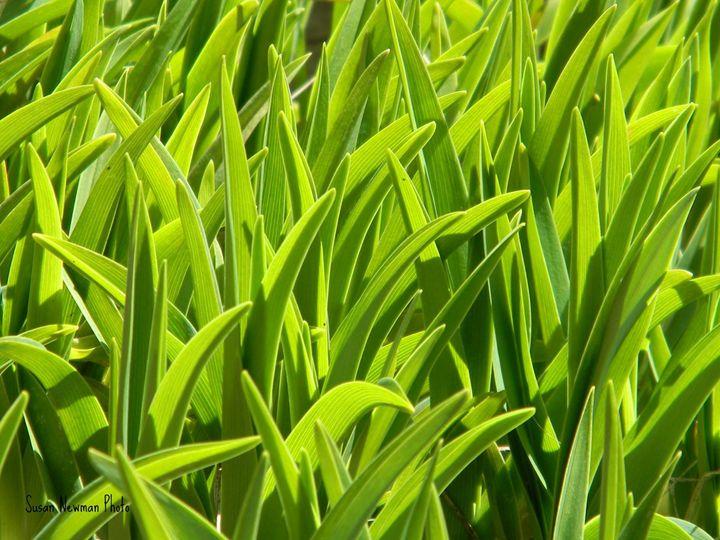 lilies - Seaside Treasures