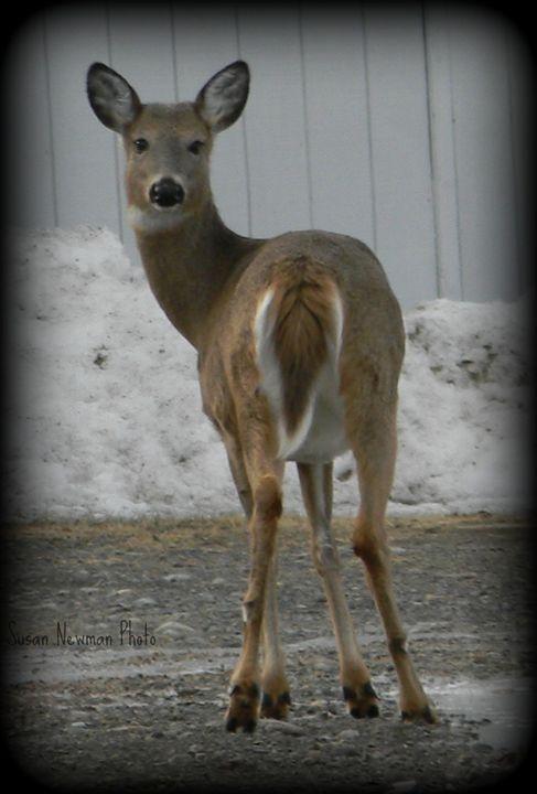 Deer Looking Back - Seaside Treasures