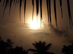 The Sun through the leave - 8