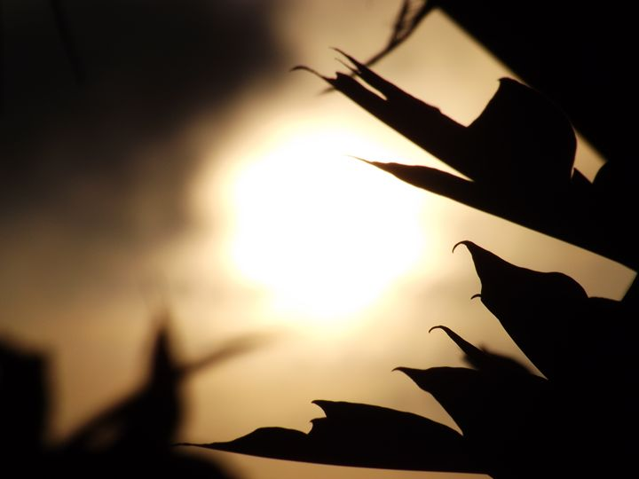 The Sun through the leaves - 9 - Portraits