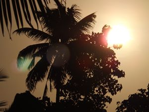 The Sun through the leaves - 3