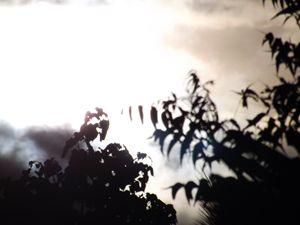 The Sun through the leaves - 5