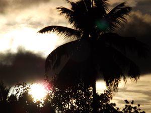 The Sun through the leaves - 6
