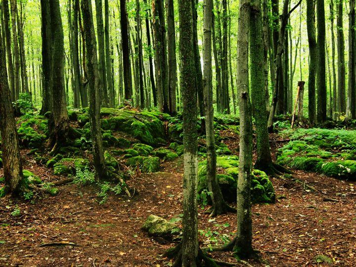 Forest Darkness - MissJuliaDoll