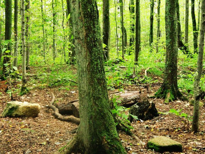 A Walk in the Woods - MissJuliaDoll