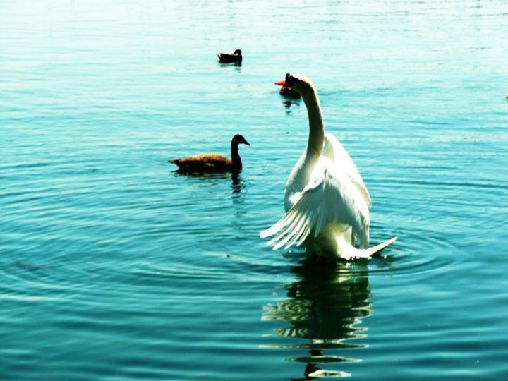 Swan - MissJuliaDoll