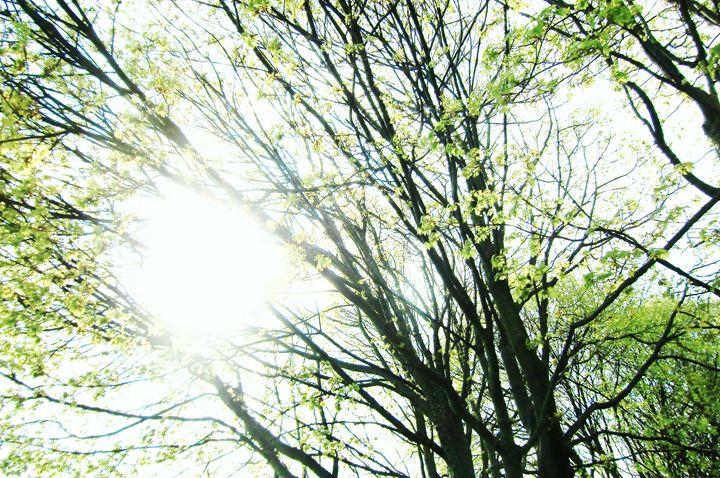 Tree Glow - MissJuliaDoll
